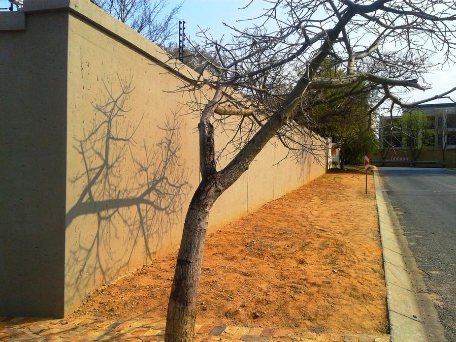 Dry Tree Shadow_Basic Edit