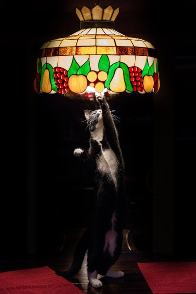 Bug in the Lamp