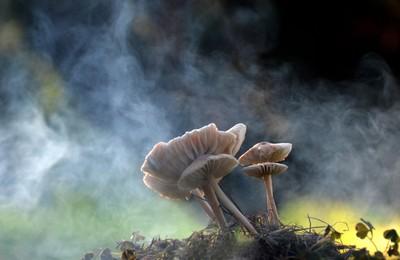 Mushrooms in the fog