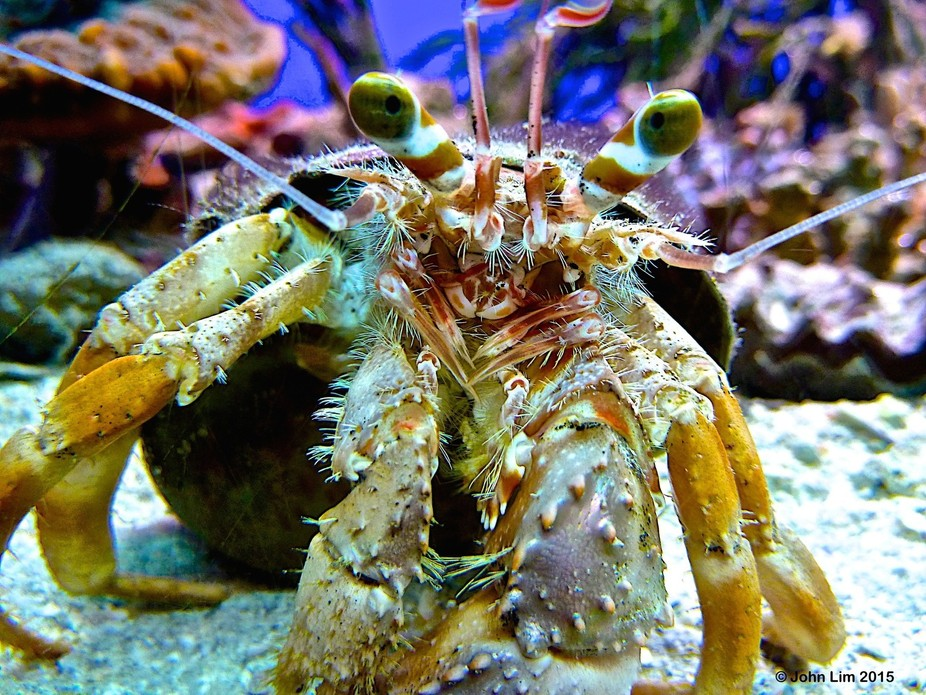 Picture taken with a compact pocket camera at an aquarium in Noumea.
