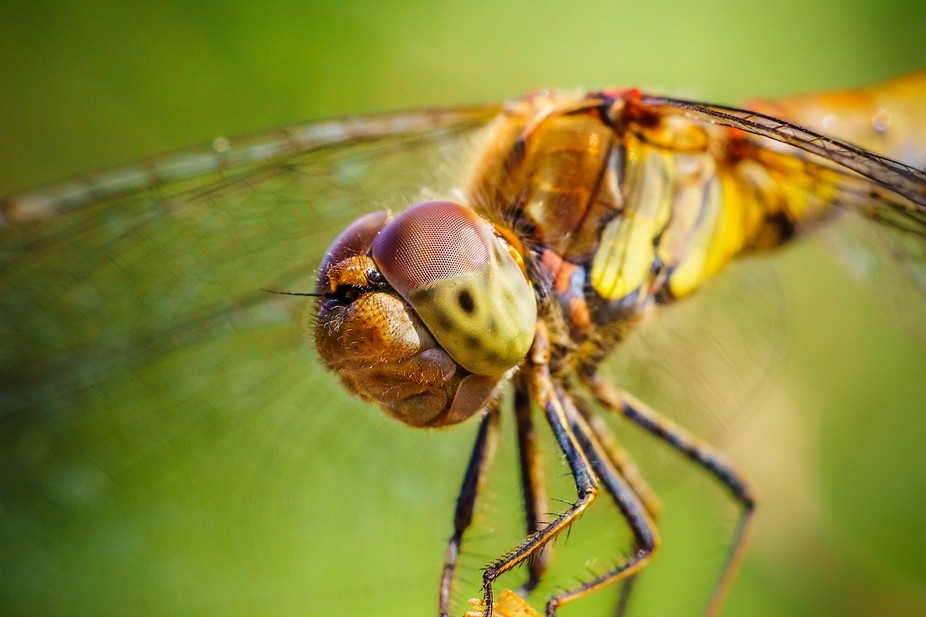 this dragonfly didn't mind me getting very close..