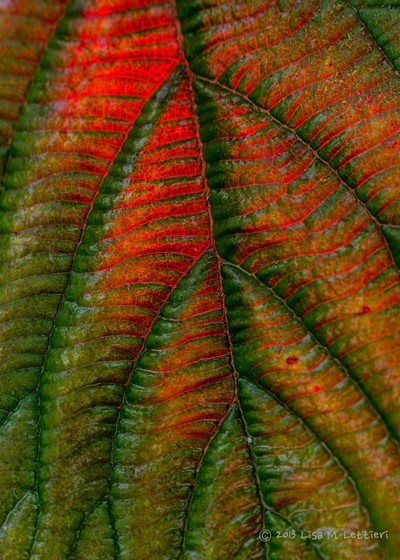 Leaf colors and Texture