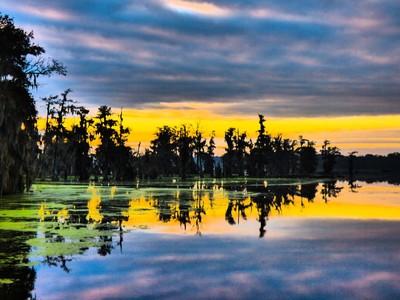 Swampy Blue Sunrise