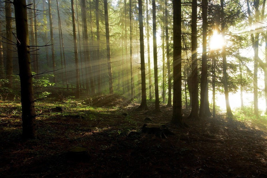 When the dust rises and clears, the sun has a chance to make its entrance in the wood.  Bavarian ...