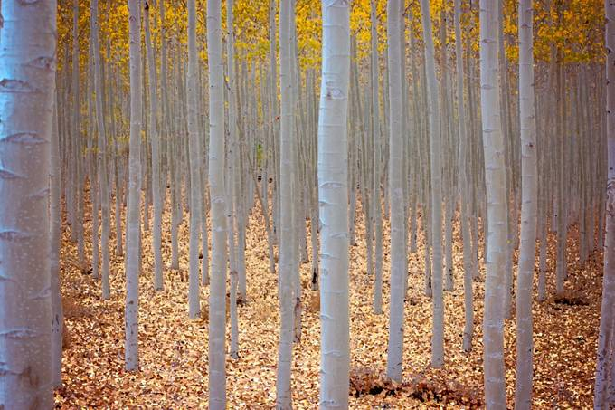 Boardman Painting by tomtyson - Tall Trees Photo Contest