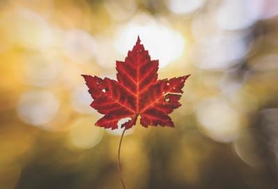 I don't think I'maple to leaf Autumn