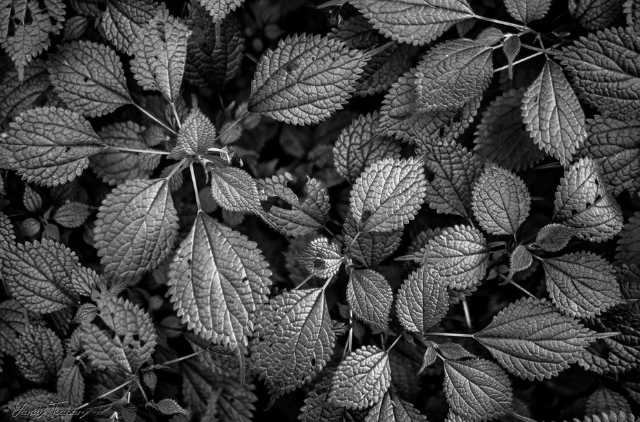 Those are leaves. that's the story. Well it was taken in China, so I gues those are Chin...