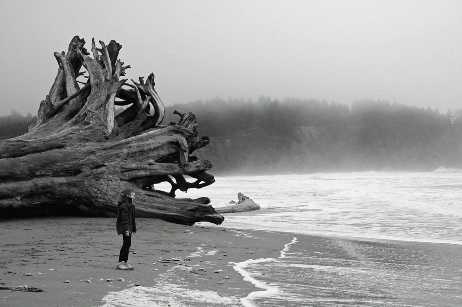 Taken on holiday, my daughter standing beside a massive red wood tree, washed up by a storm.