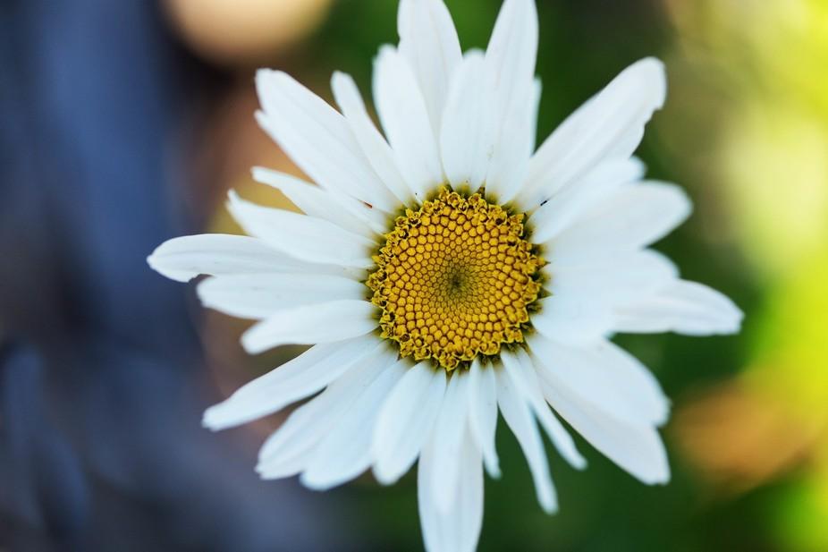 Hello, Daisy!