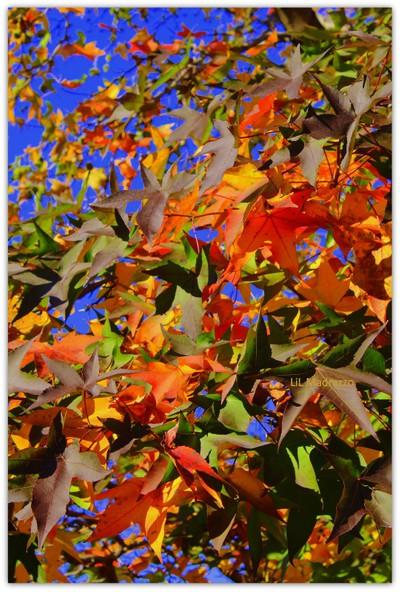 """""""Fall-ing Leaves"""