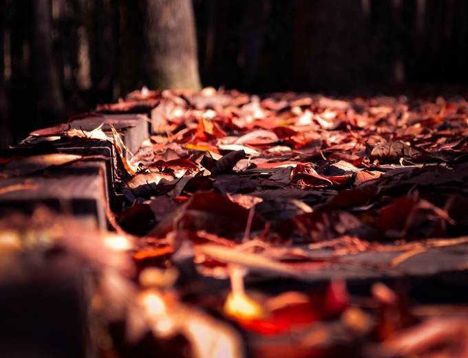 Autum Carpet by Buck56 - A Low Vantage Point Photo Contest