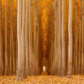 A forest made with the photographer in mind.
