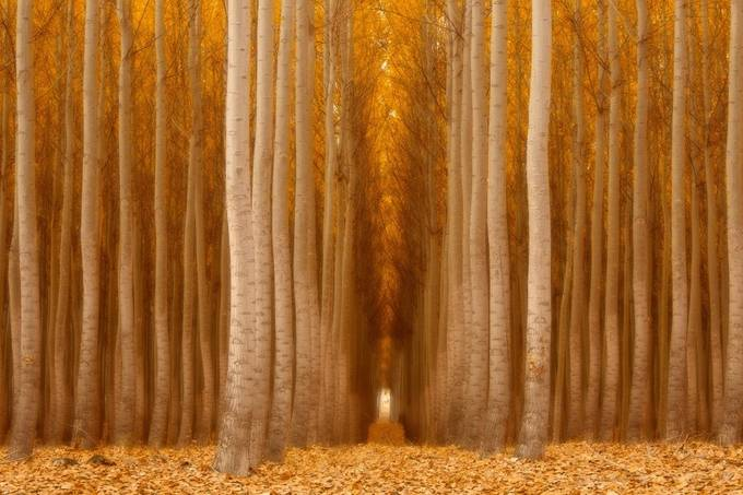 Wooded Cathedral by ernogy - Fall 2016 Photo Contest