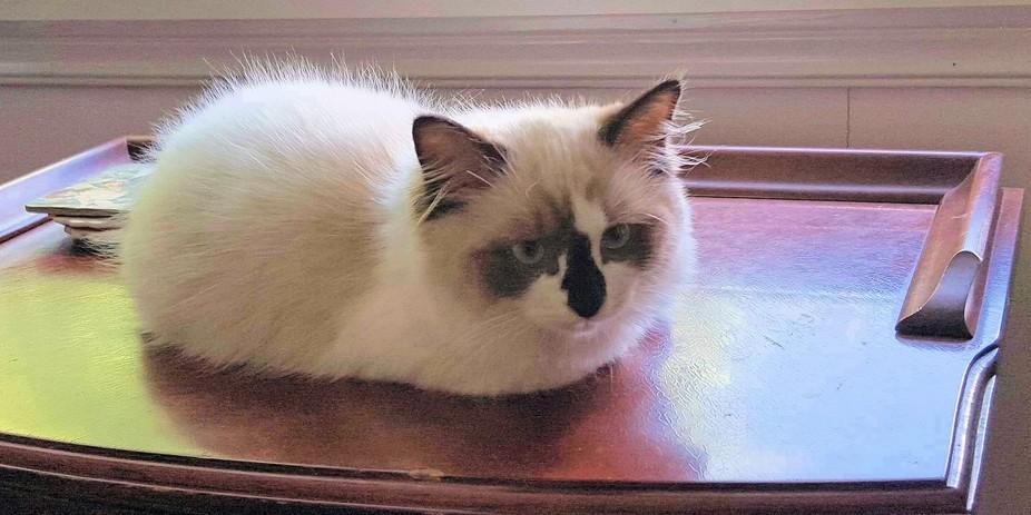 Cute little kitten on a drawer.