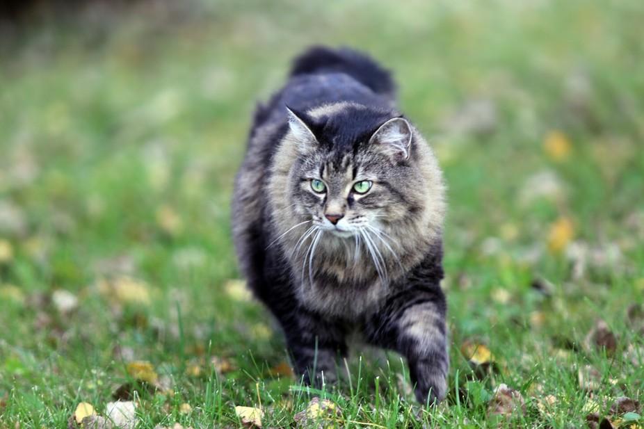 Meekie on the prowl