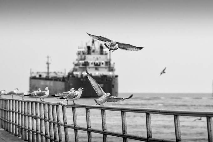Gulls & Freighter B&W by jreid13 - Diagonal Compositions Photo Contest