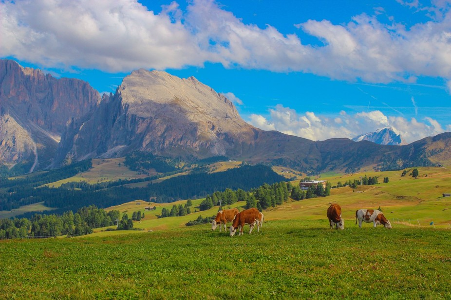 A capture of a captivating scene in the Dolomites preserve in Northern Italy