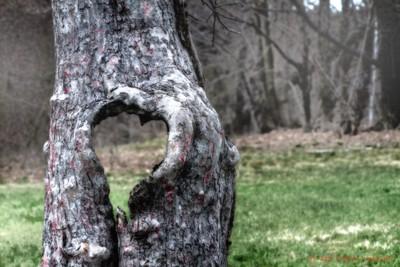wHole Hearted Tree