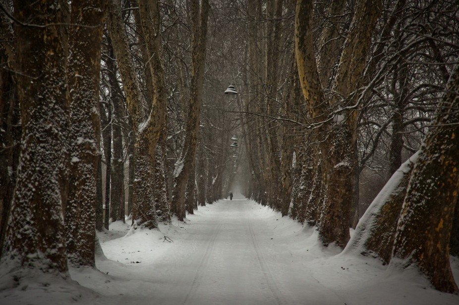 2010, Bosnia,  A lone person walks along a snow covered forest road in a very famous park in Sara...