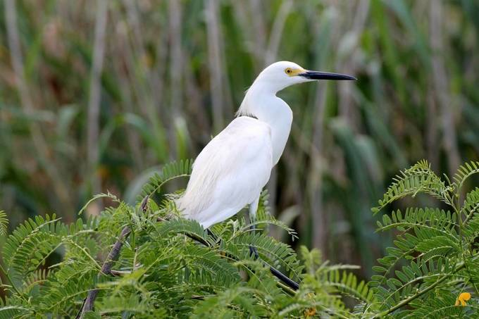 Common egret, but I just liked the setting.