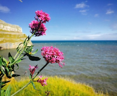 Coastal flora