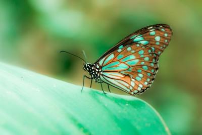 turquoise spot