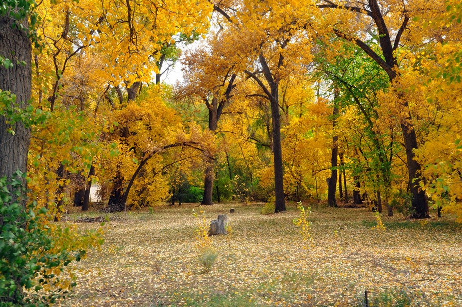 Taos, New Mexico is wonderful place to visit, but Taos in autumn is majical.  This was a small em...