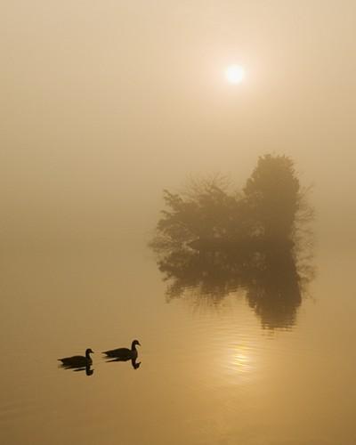 Morning Fog Reflection
