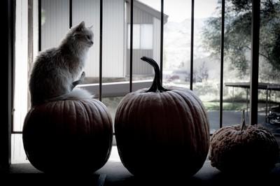 cat w-pumpkins