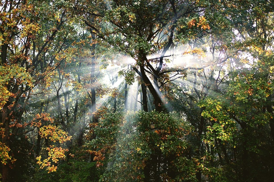 Forest,Fall,Light,Sun,Hope,Photography,Nature