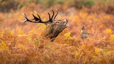 Mark Bridger Shows Off His Prize And The Photos Captured With His New Tamron Lens