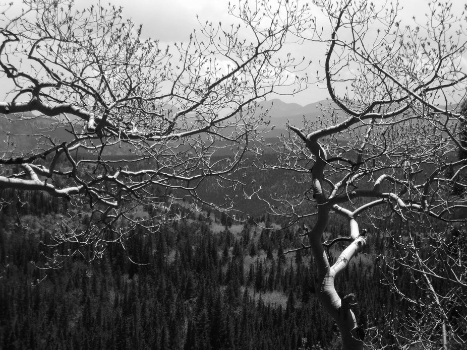Depth of Field shot of tree limbs in the foreground and mountain range in back.  Shot was taken a...