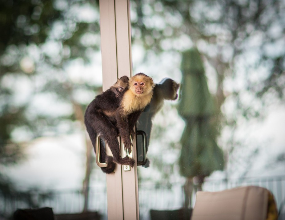 Vacationing in Costa Rica. This mother and child came to visit our Costa Rican house every day lo...