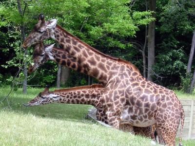 2-Zoo 063