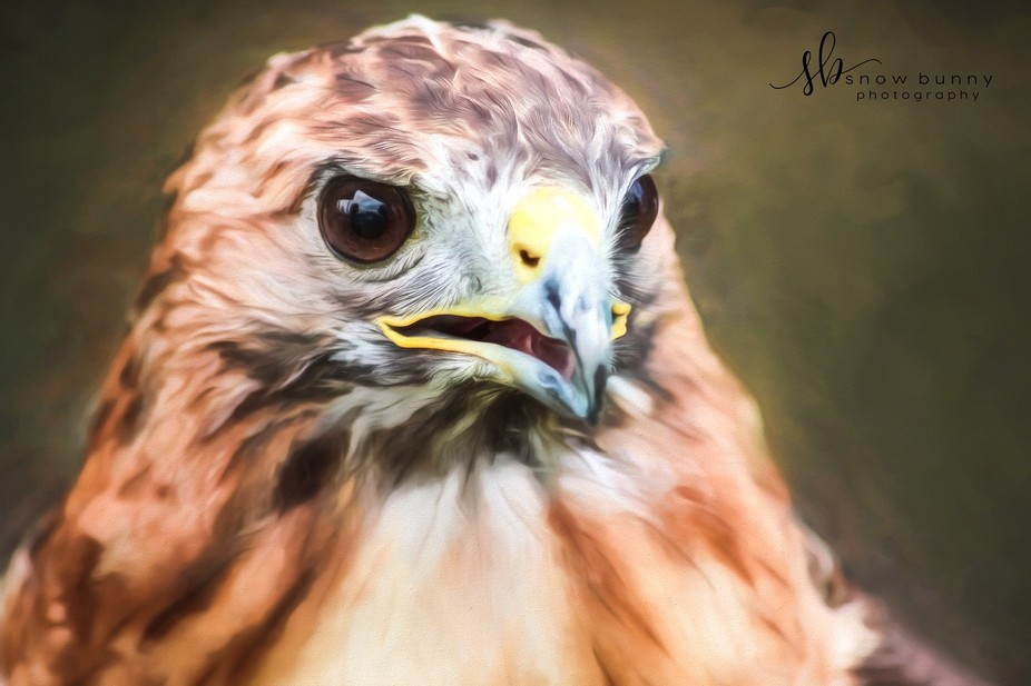 Saw this gorgeous redtailed hawk at this year's Hawkfest in Michigan. My great friend Ke...