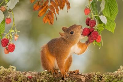 raspberry taste