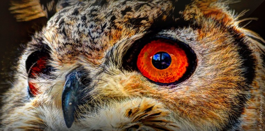 a bird of preys birds eye view