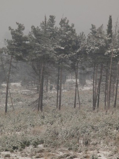 Resisting trees.