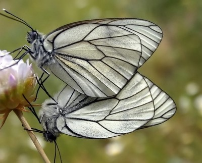 Amor de mariposas