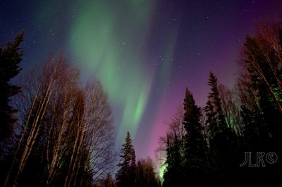 Aurora in trees 1