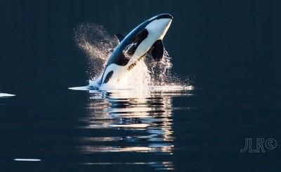 Orca Breach 1