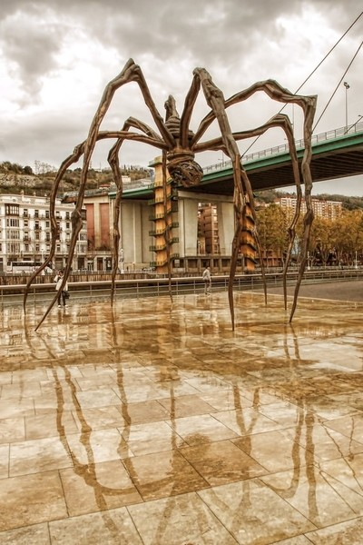 Arachnid Reflections