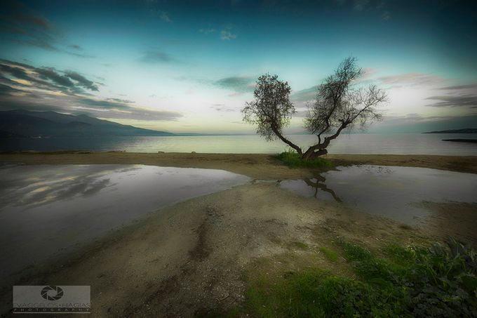 TREE NEXT TO THE SEA by evaggeloshagias - A Lonely Tree Photo Contest