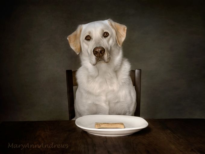 Dessert-for-a-Princess by MaryAnnAndrews - Pets With Character Photo Contest