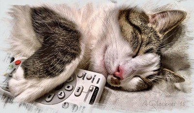 Don't change the channel... I'm awake... really...