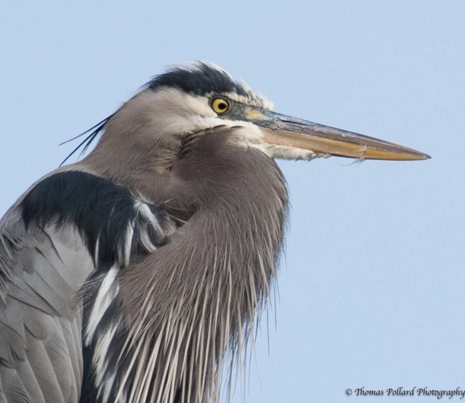 heron and cardinals 2-8747
