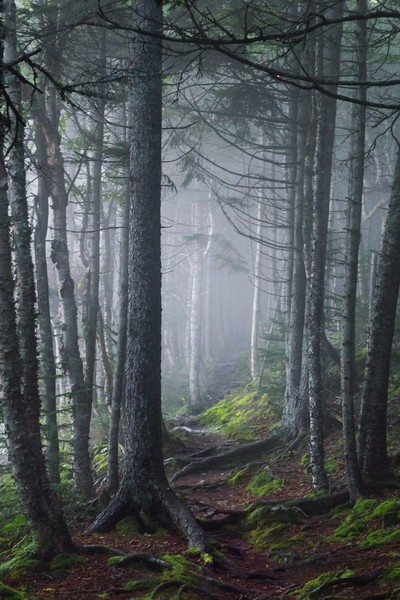 Fundy Fog