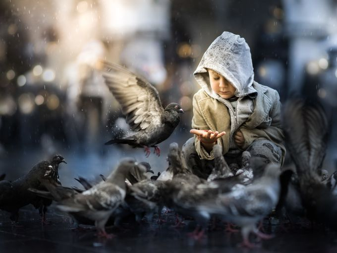 pigeons by Iwona - People And Animals Photo Contest
