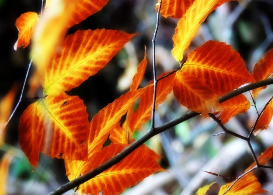 Leaf Magic