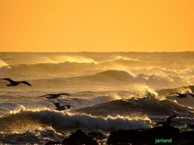 Windy Surfing Gulls